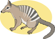 Numbat clipart Numbat Results Results Search marsupial