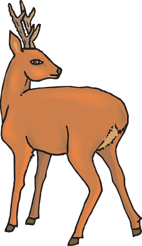 Numbat clipart Art Public Animals Domain Deer