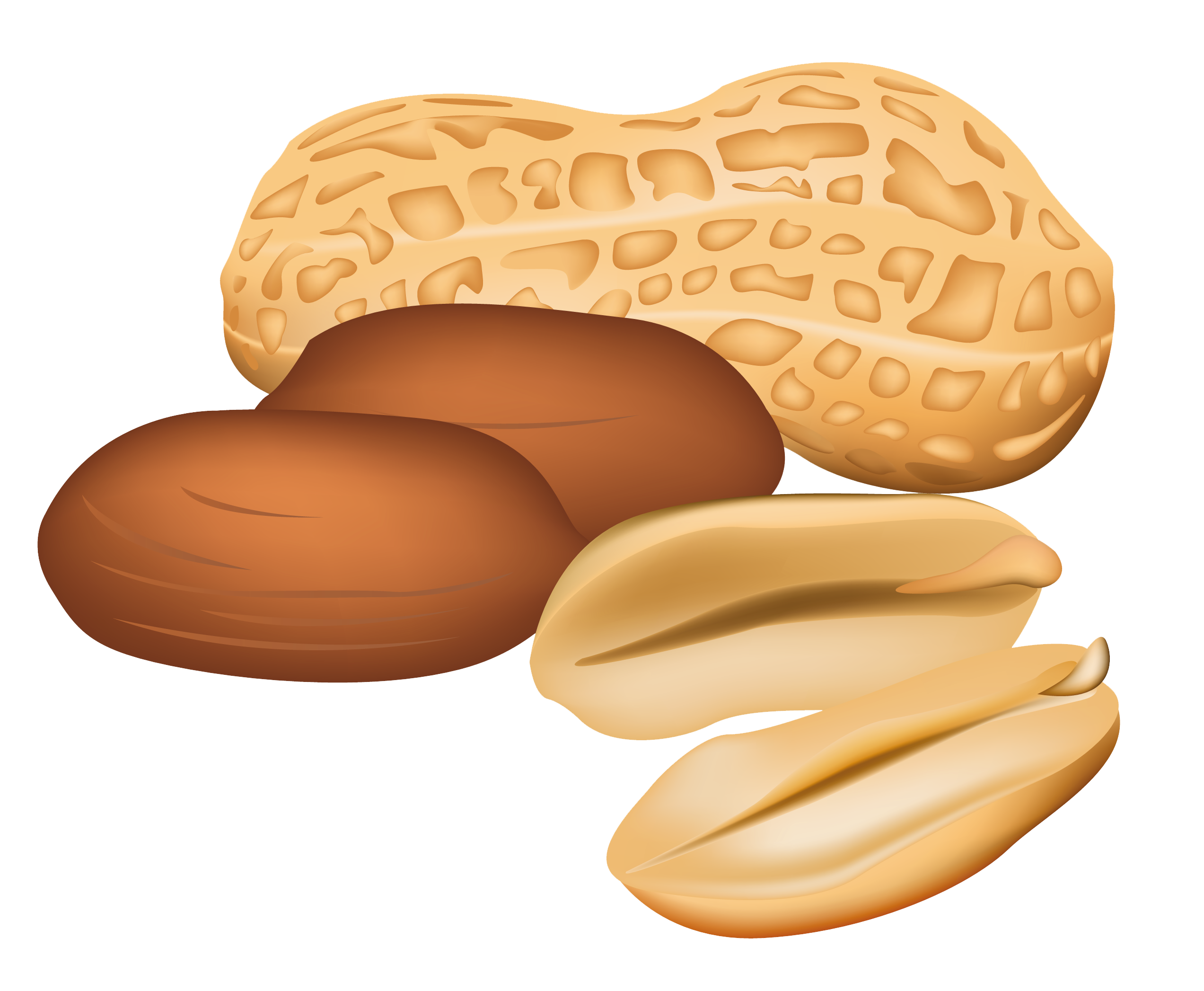 Nut clipart Nuts No collection clipart Clipart
