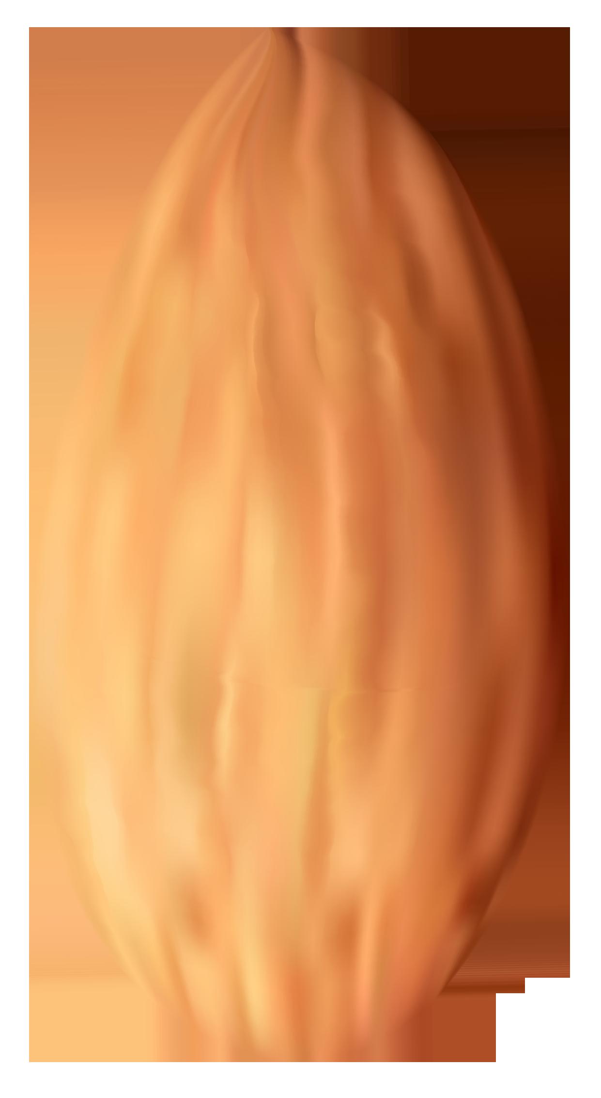 Nut clipart Nut Clipart PNG Clipart Best