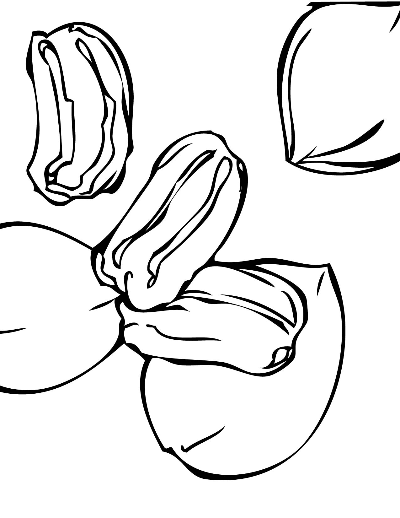 Nut clipart coloring Pages for for Kids Nut