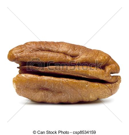Nut clipart pecan Nut  and isolated Images