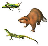 Nutria clipart Clipart Images Free Clipart nutria%20clipart