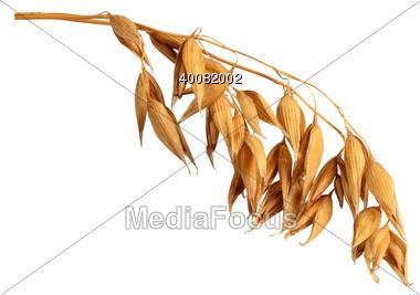 Oat clipart Clipart Free Clipart oats Photo: