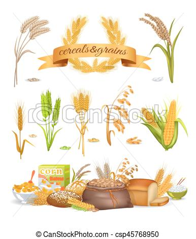 Oat clipart grain product Grains on background illustration wheat