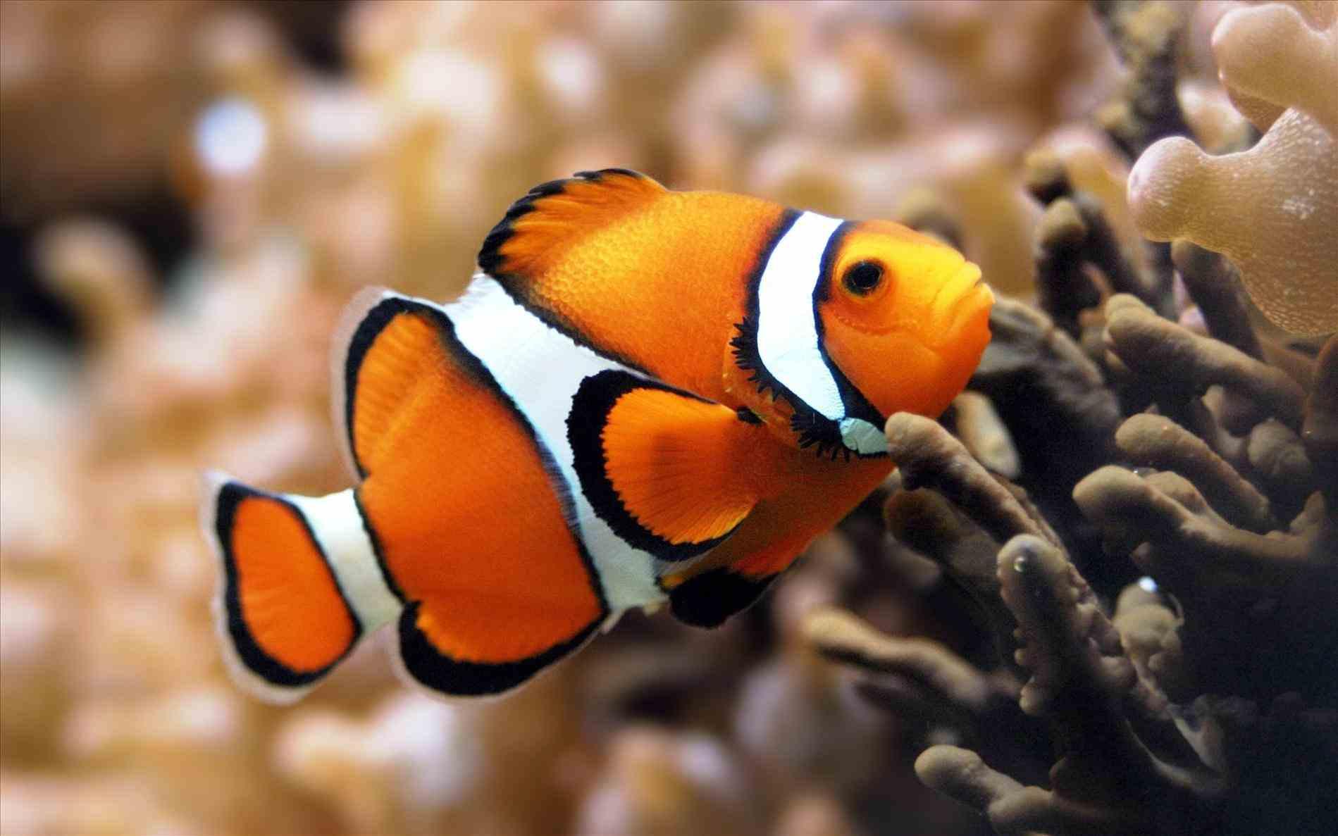 Ocean clipart orange color Ocean Number out Fish cut