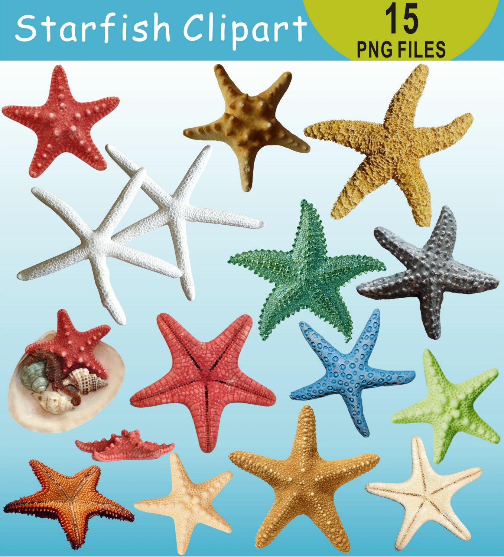 Ocean clipart starfish This Sea Ocean Clipart Starfish