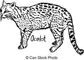 Ocelot clipart Hand Ocelot black  vector