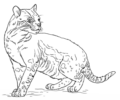 Ocelot clipart black and white Coloring Coloring see Free Coloring