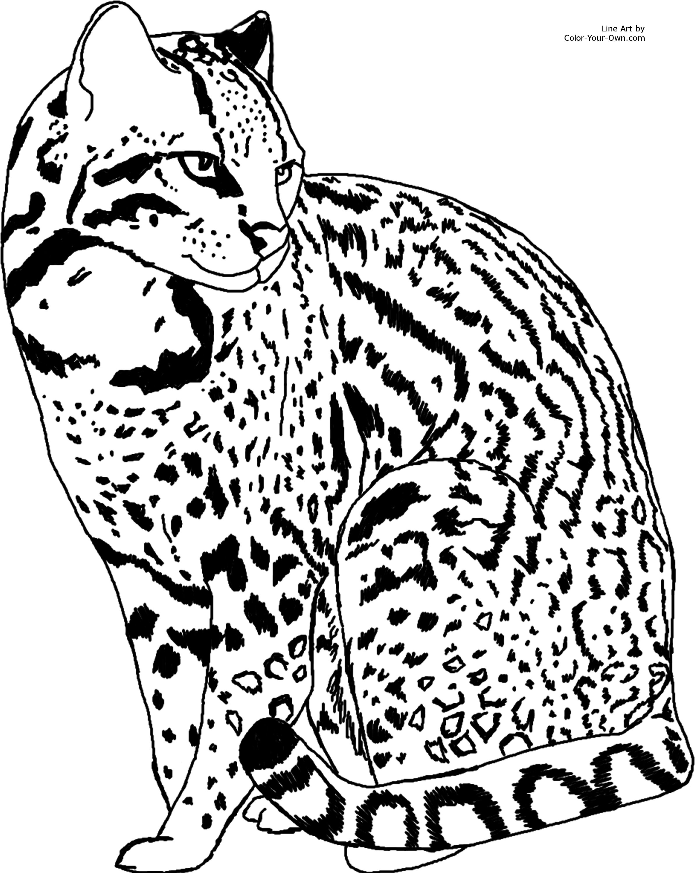 Ocelot clipart black and white Silhouettes Cat (2387×3000) jpg Colouring