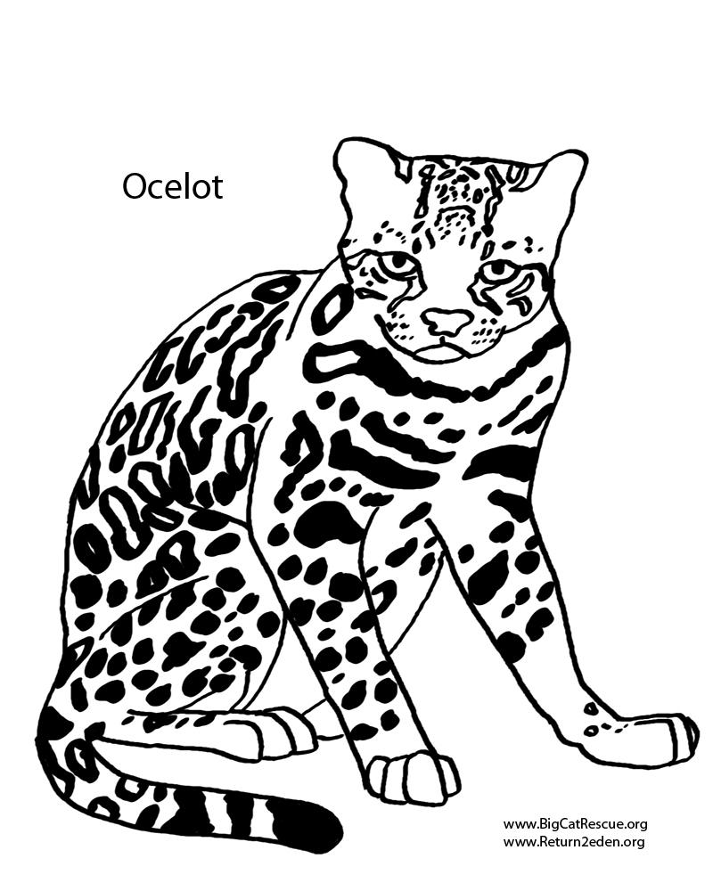 Ocelot clipart black and white Clipart art ocelot clip 122