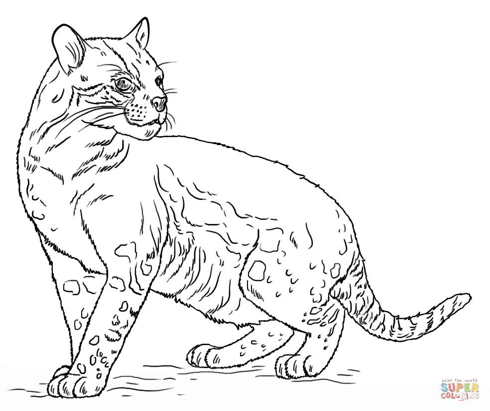 Ocelot clipart desert animal Ocelot coloring Printable the Click