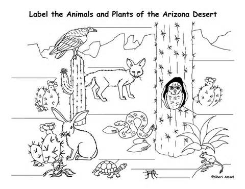 Ocelot clipart desert animal Pages Coloring Pages Habitat Pages