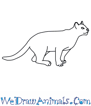 Ocelot clipart drawing Ocelot to How Draw an
