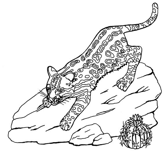 Ocelot clipart drawing Clip Clipart art clip #39