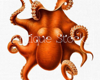 Octopus clipart brown Clip Wall Etsy for art