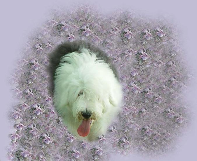 Old English Sheepdog clipart service dog Call the and is Daja
