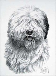 Old English Sheepdog clipart cartoon DOG Sun Search MY English