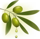 Olive clipart greek olive · Royalty with Background green