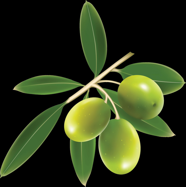 Olive clipart green olive StickPNG transparent Green Green Olives
