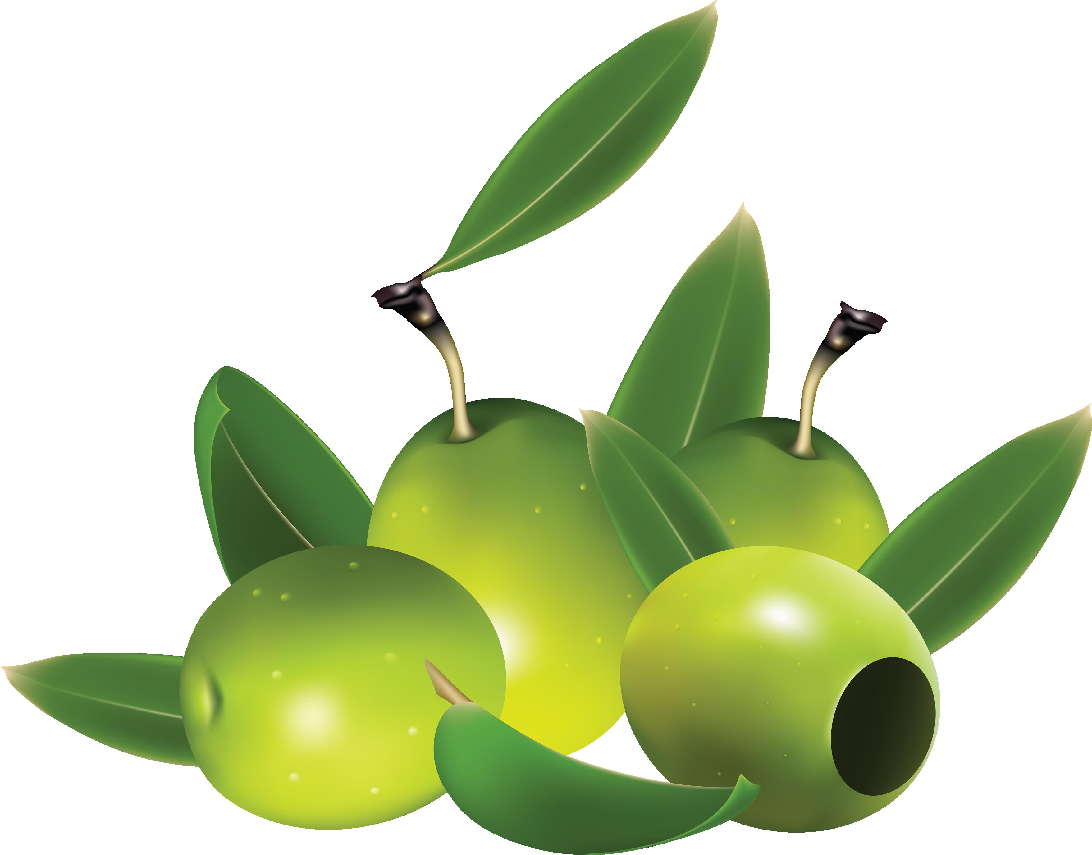 Olive clipart green olive Download images olive Olives PNG