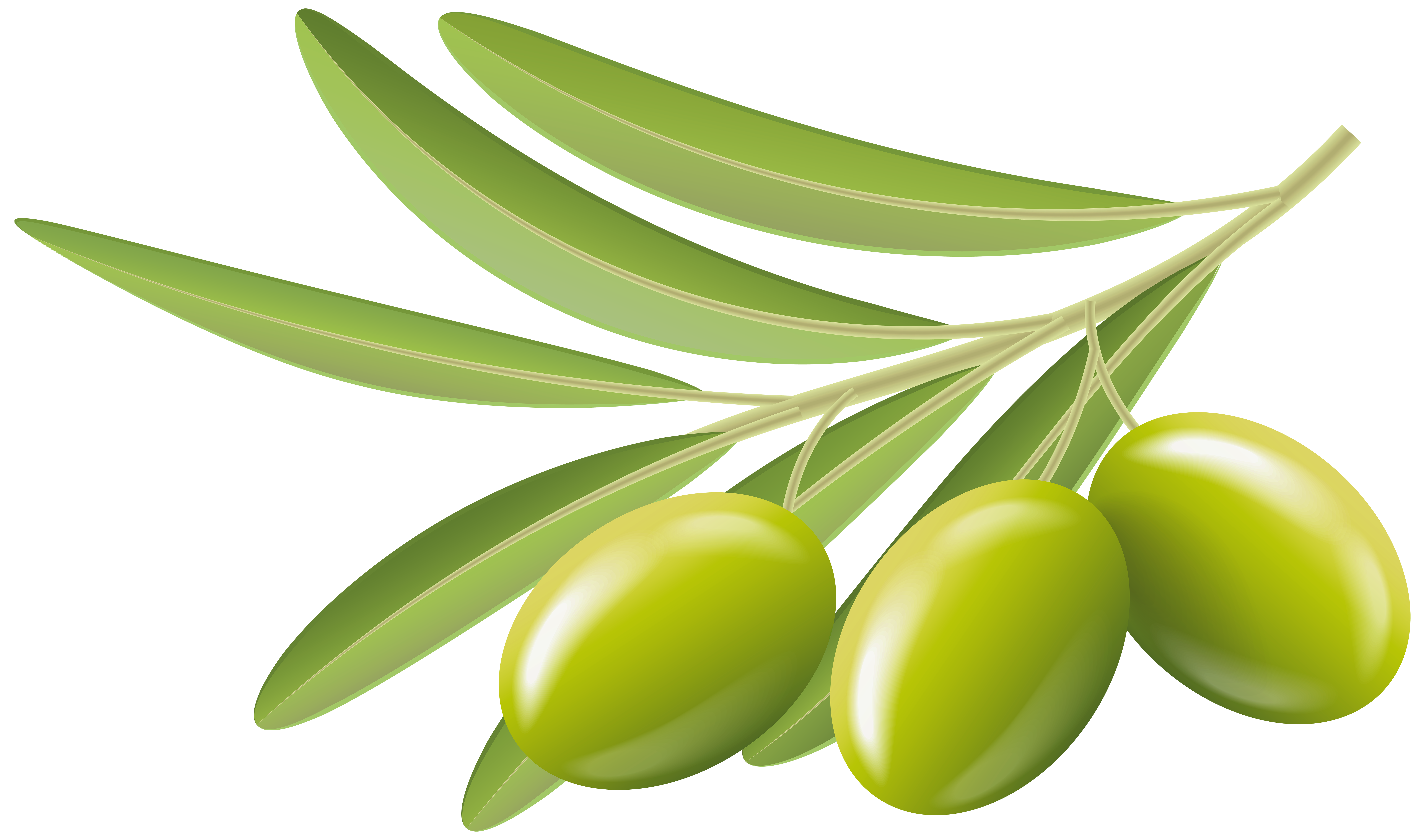 Olive clipart green olive Art Transparent Image Green Gallery