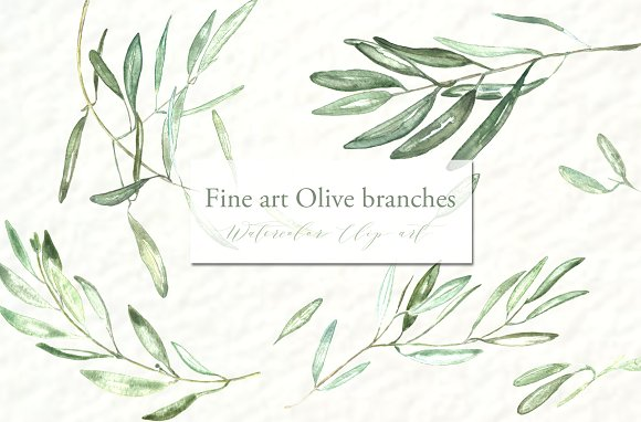 Branch clipart watercolor Branches Market clipart Olive Watercolor