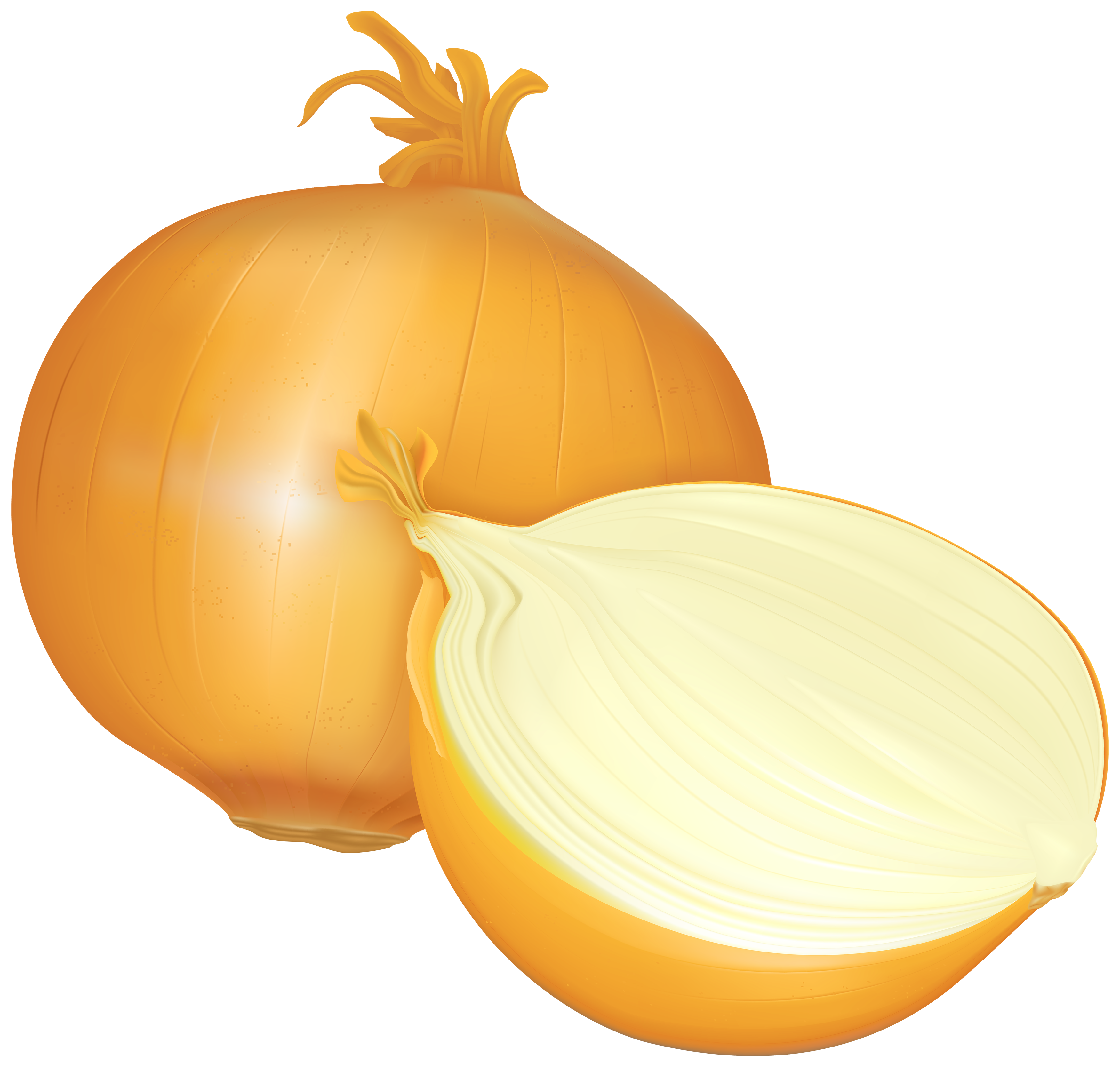 Onion clipart About All Clipart Onion clipground