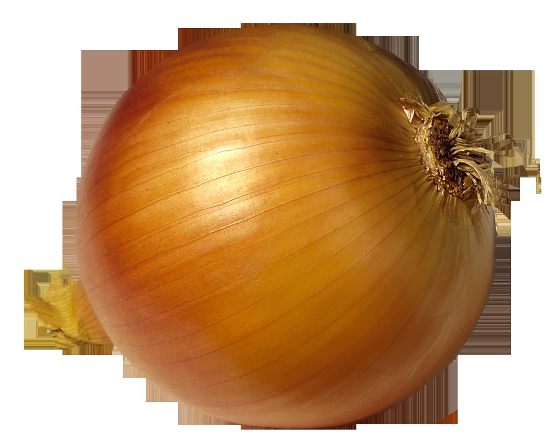 Onion clipart Clipart clip  7 Onion