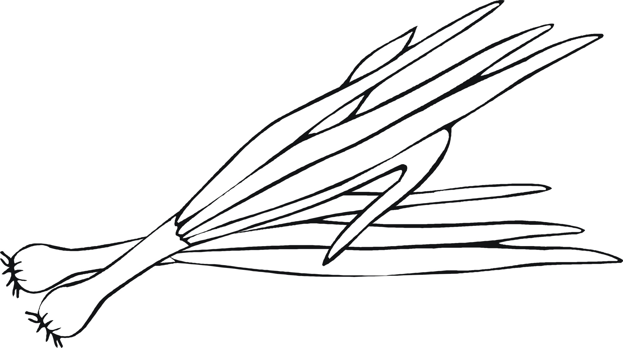Onion clipart coloring page – Children's Coloring pages Food
