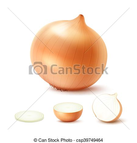 Onion clipart happy Of Set of Sliced Art