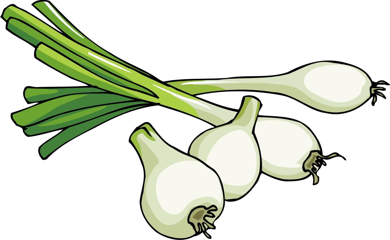 Onion clipart outline Onion Clipart Free onion%20clipart Panda