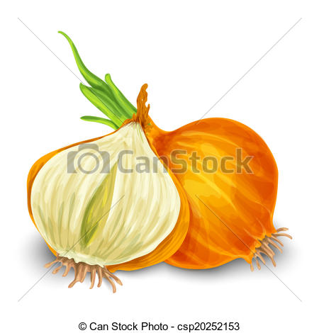 Onion clipart happy Onion 257 188 Vegetable Illustrations