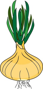 Onion clipart yellow 20clipart Clipart Images onion%20clipart Free