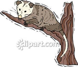 Opossum clipart Download – Opossum Opossum Clipart