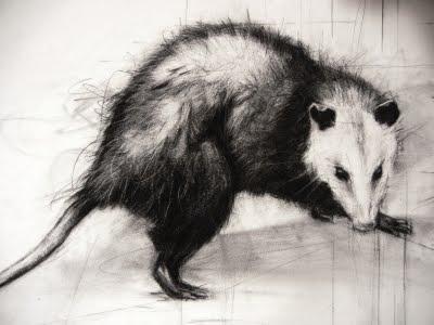 Opossum clipart odd Opossum Pinterest beauty Coppini Odd