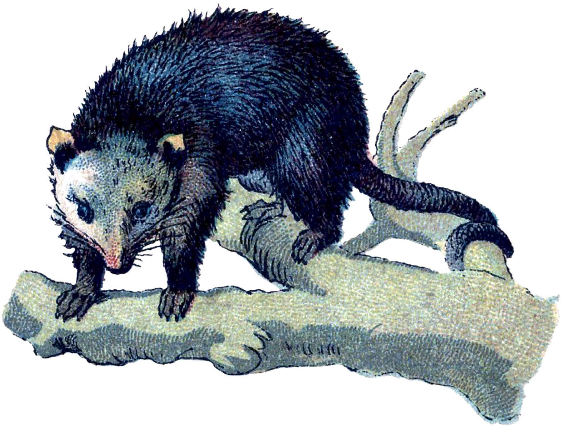 Opossum clipart odd Vintage Fairy Graphics Image? The
