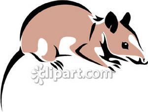 Possum clipart opossum #8