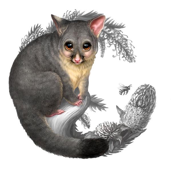 Possum clipart opossum #10