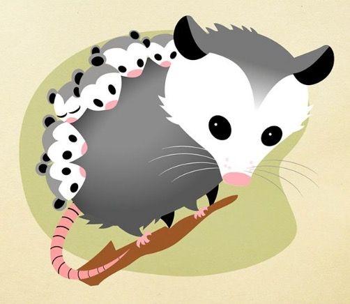 Possum clipart opossum #13