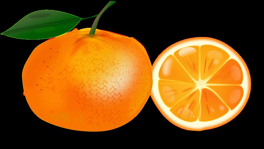 Orange clipart Clip #16686 Best #16686 com