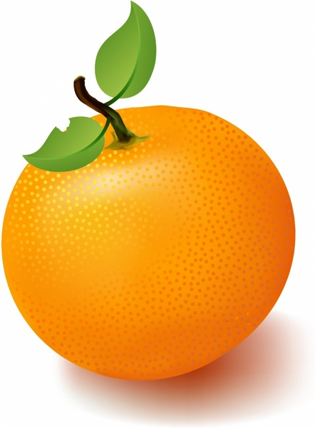 Citrus clipart orange fruit Free 459 vector (6 vector)