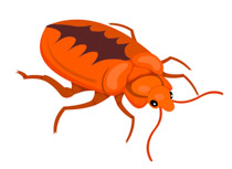 Orange clipart bug Search clipart Insect Kb