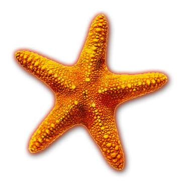 Starfish clipart sea star Clipart clipart Clip Clip Download