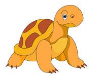 Reptile clipart turtle #11