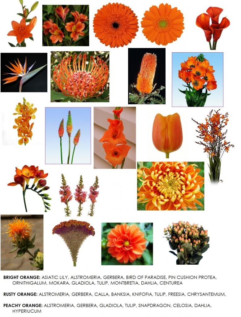 Orange Flower clipart small flower Design Floral list orange Dahlia