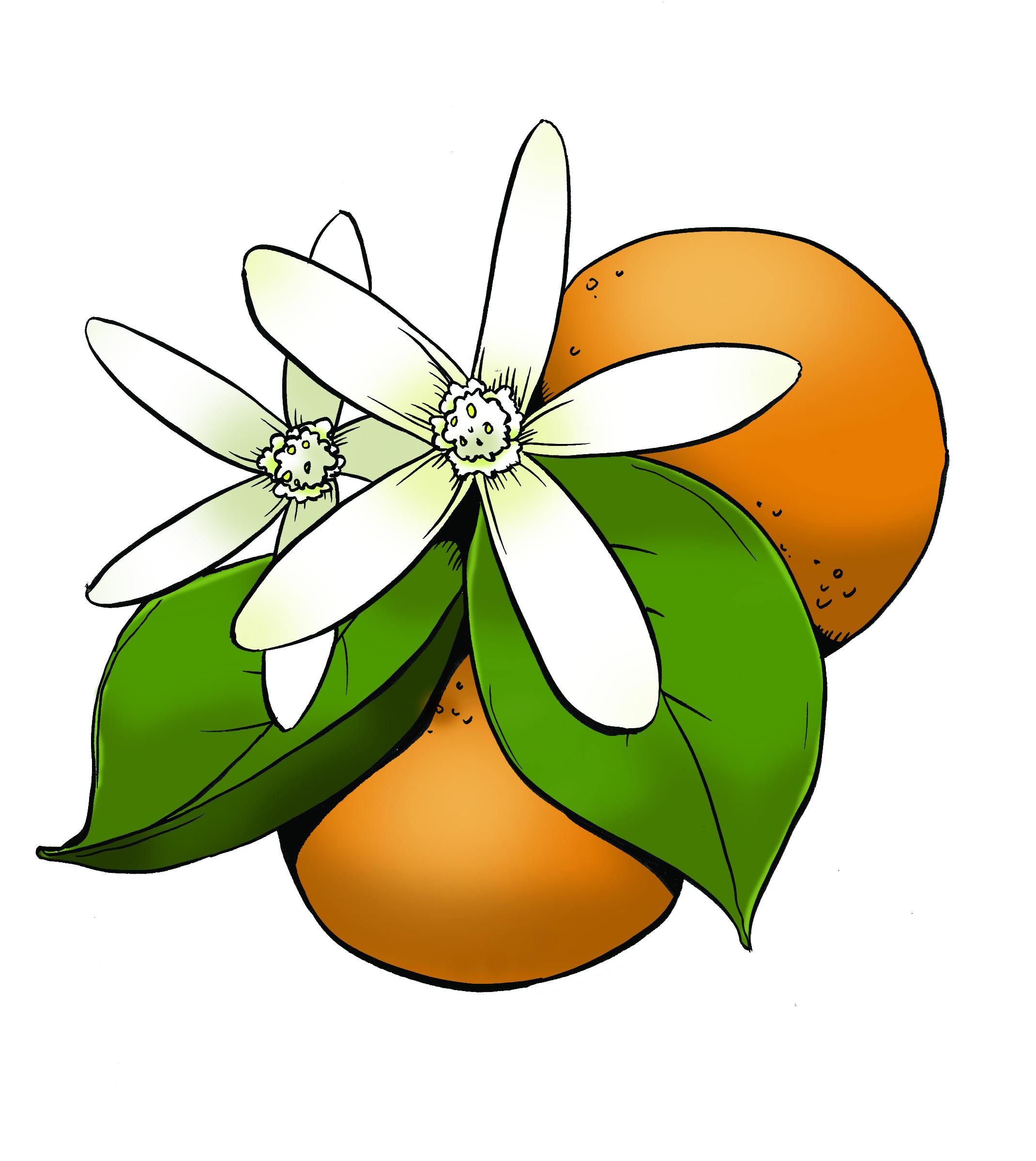 Orange Flower clipart orange color Blossom Tripel Recipe: Blossom orange