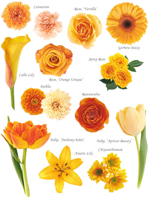 Orange Flower clipart small flower Color and by Orange Flower