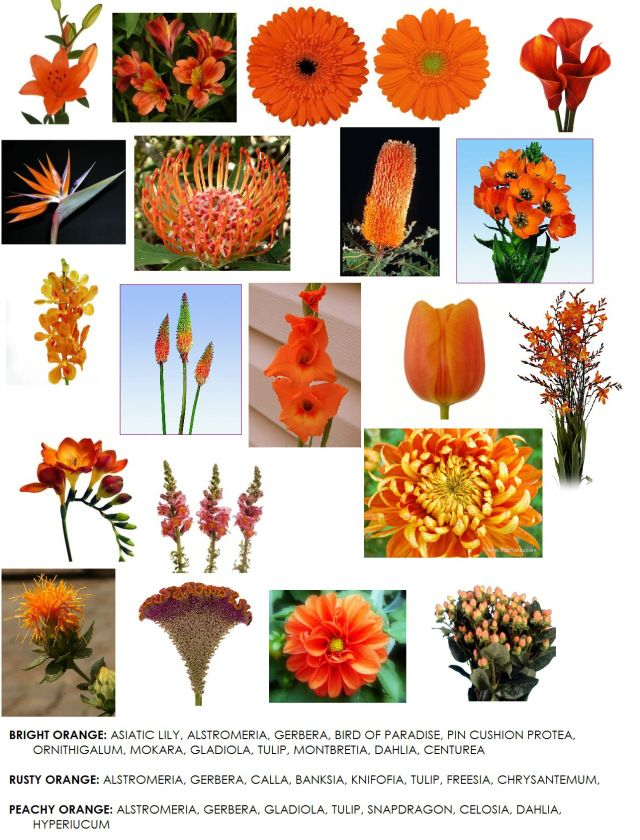 Orange Flower clipart orange color This images Reference Flower more