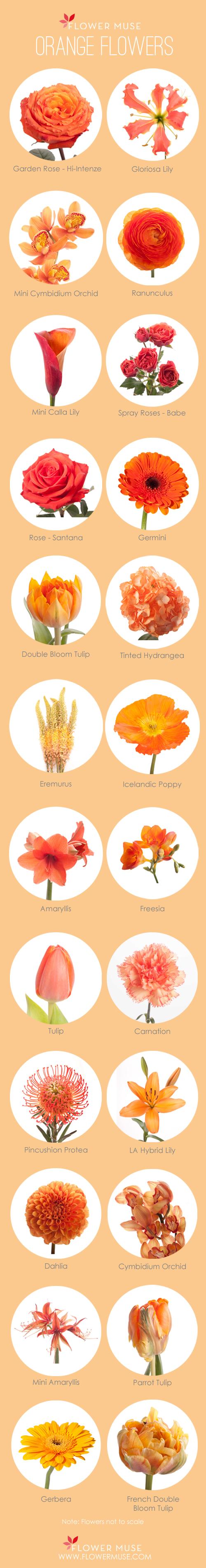 Orange Flower clipart orange color · Flower Flowers Muse Orange